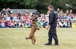 Schulkinder lernen Polizeihunde kennen